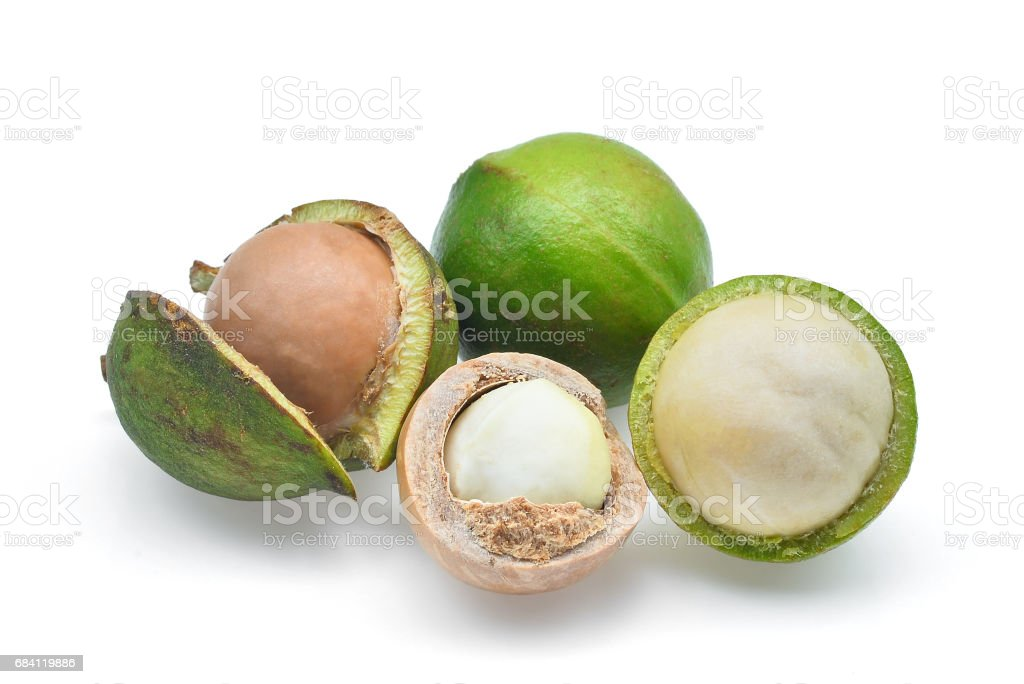 macadamia isolated on white background stock photo
