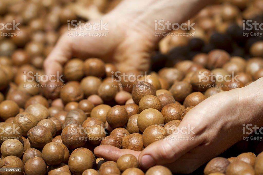 macadamia nuts. stock photo