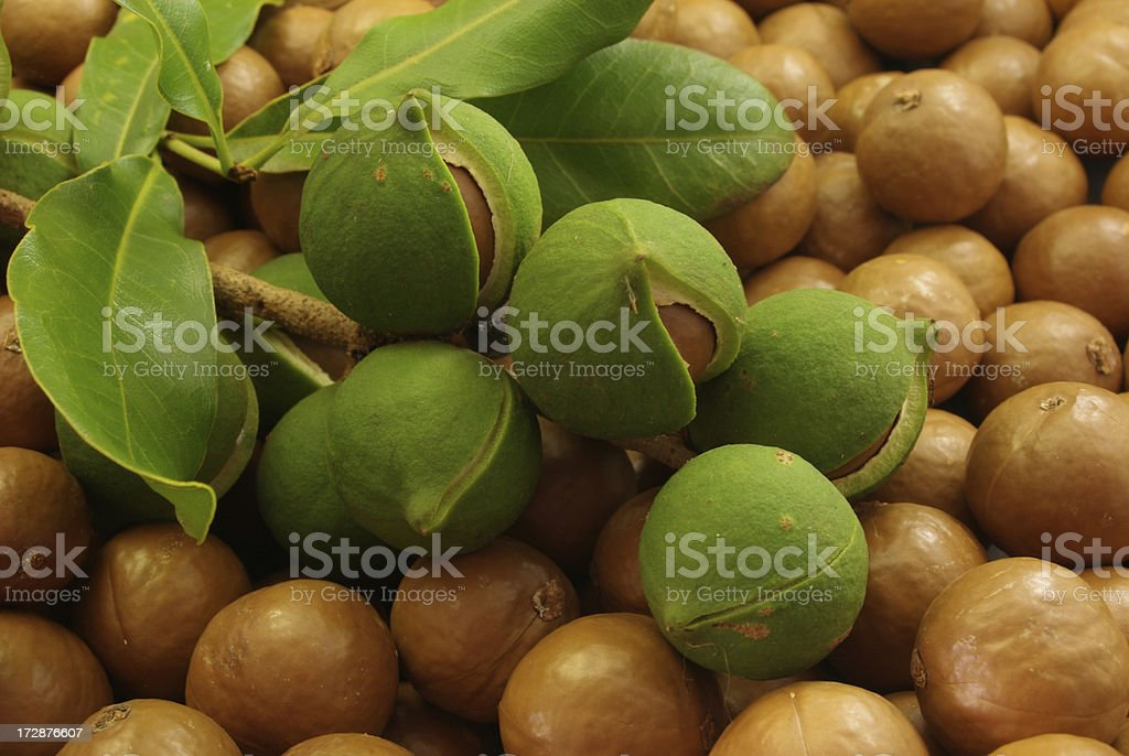 Macadamias royalty-free stock photo