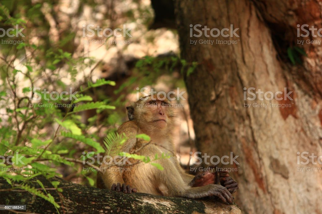 Macaque in the jungle, Railay, Krabi, Thailand stock photo