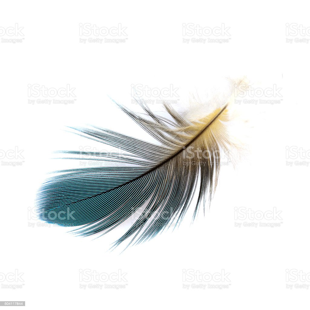 Macaw feather stock photo
