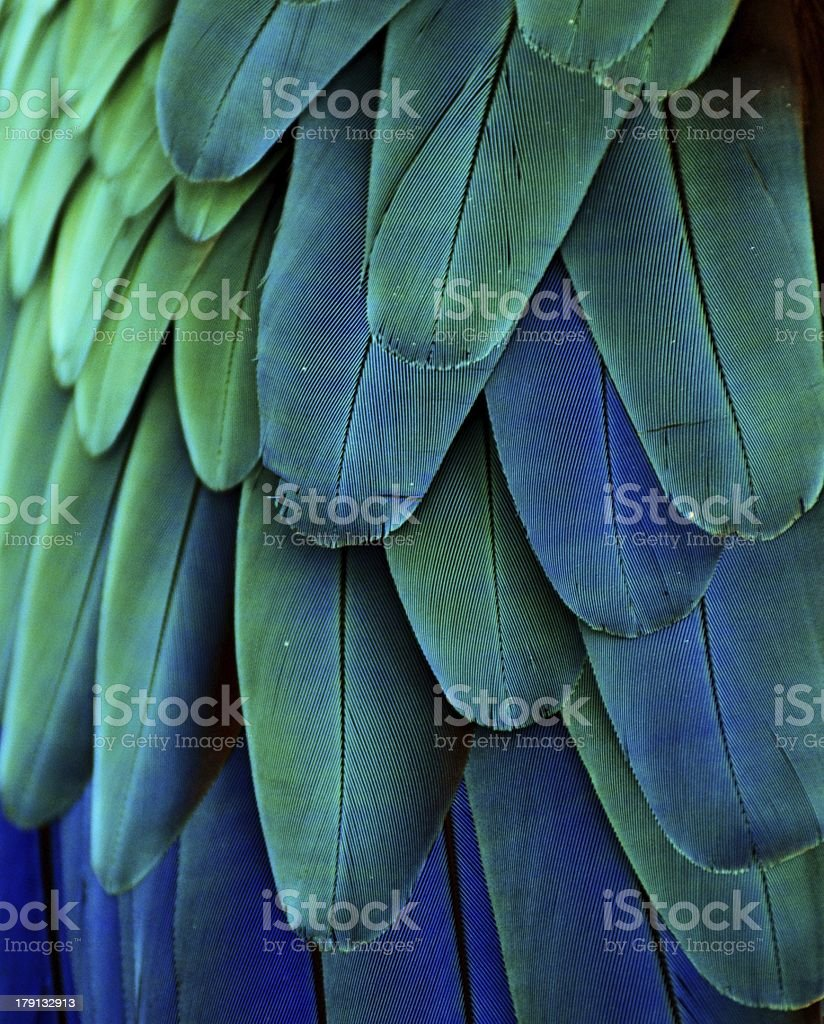 Macaw Feathers (Green/Blue) stock photo