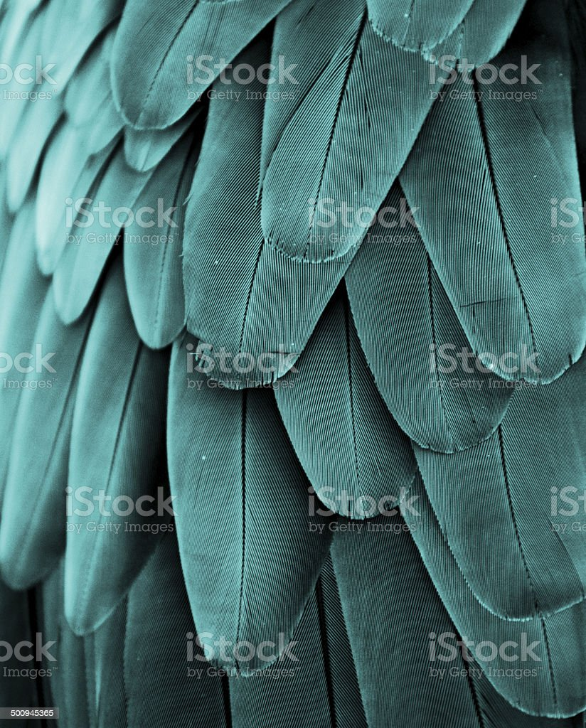 Macaw Feathers (Turquoise) stock photo