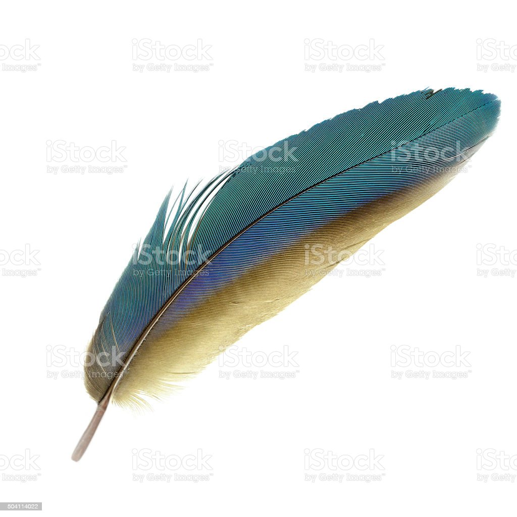Macaw feathers. stock photo