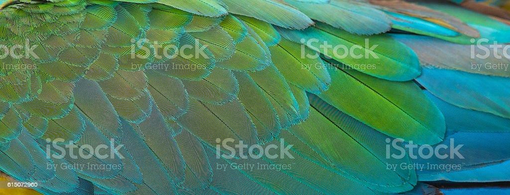 Plumes Ara macao photo libre de droits