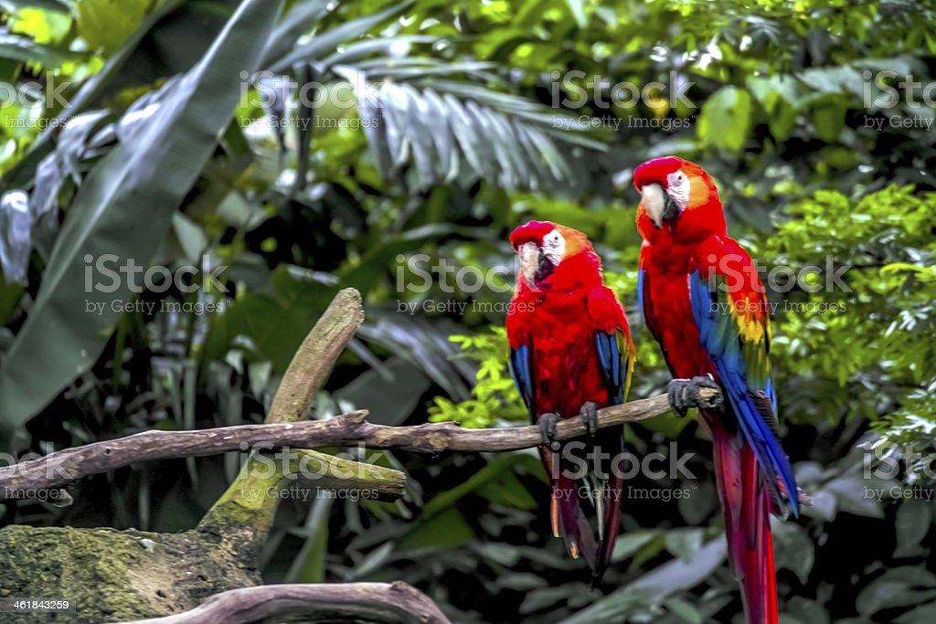 Macaw Parrot stock photo