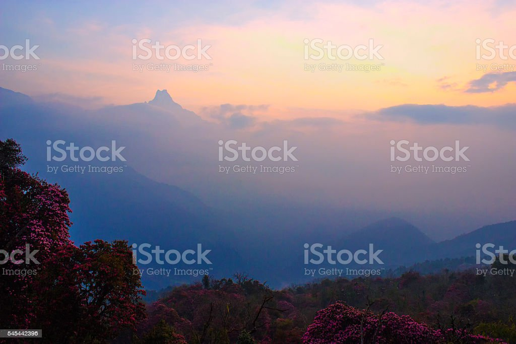 Machapuchare in sunrise stock photo
