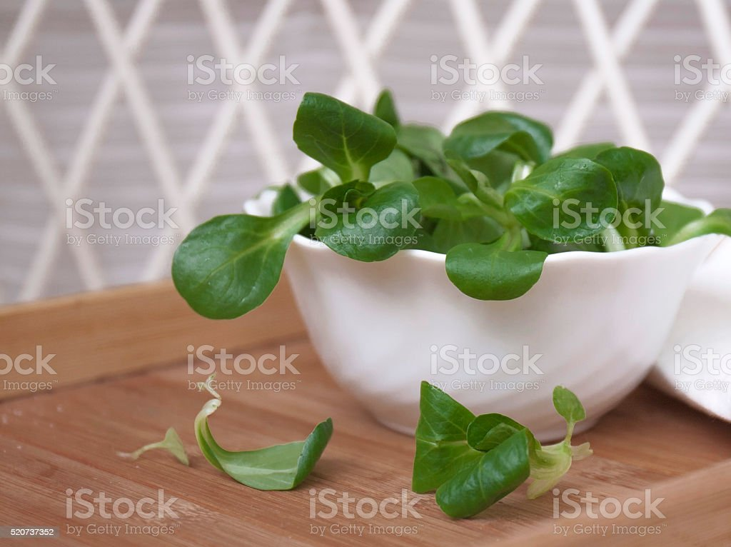 Mache Lettuce, corn salad, freshly harvested from organic farm stock photo