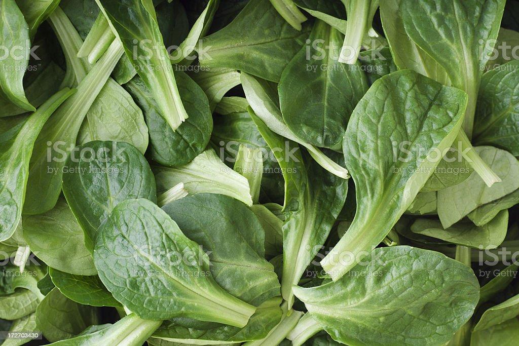 Mache Salad royalty-free stock photo