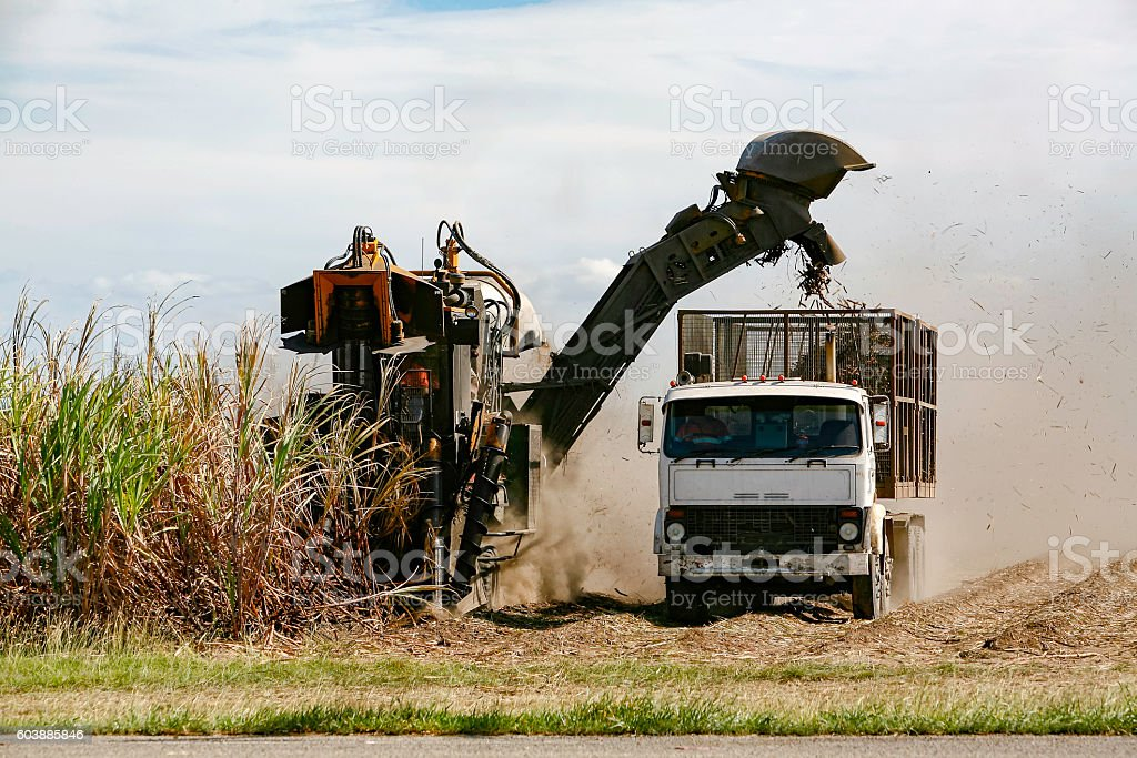 Machine harvesting sugar cane in tropical climate stock photo