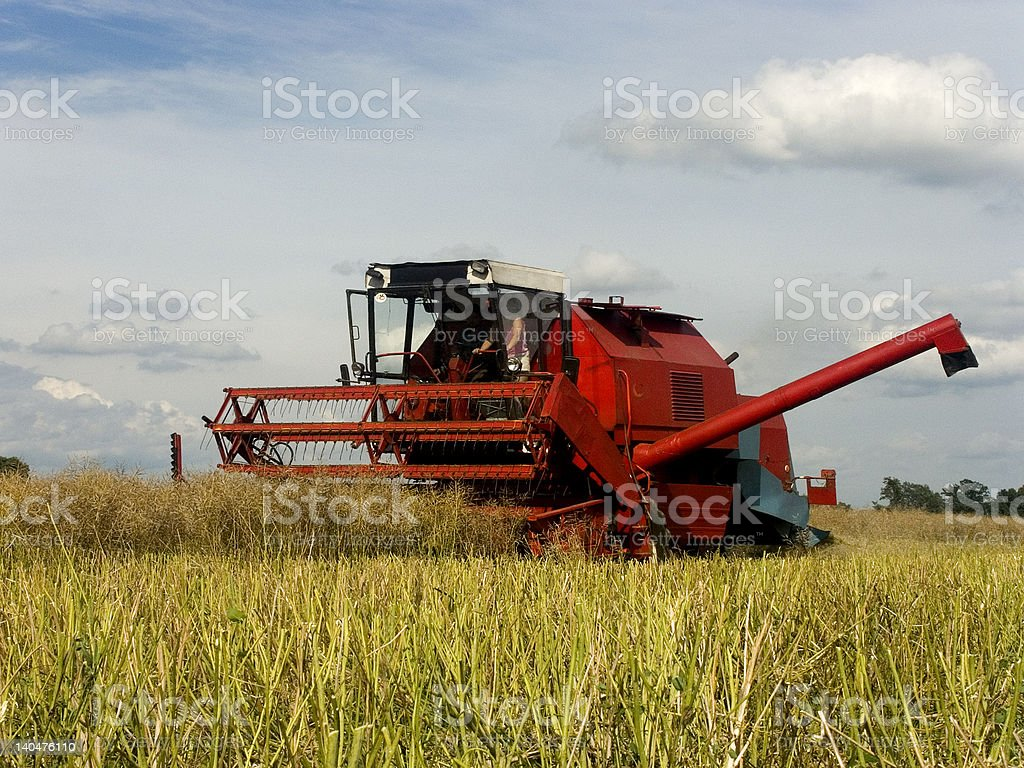 Machine harvesting the rape royalty-free stock photo