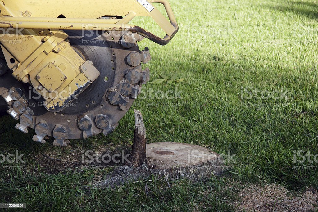 machinery positioned stump extractor tree removal stock photo
