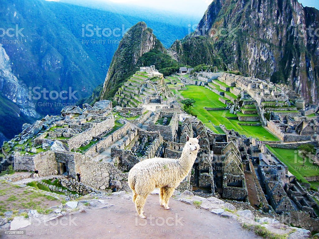 Machu Picchu ruins with llama, Cuzco, Perú stock photo