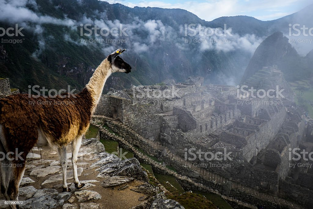 Machu Picchu with Lama at Sunrise and Clouds stock photo