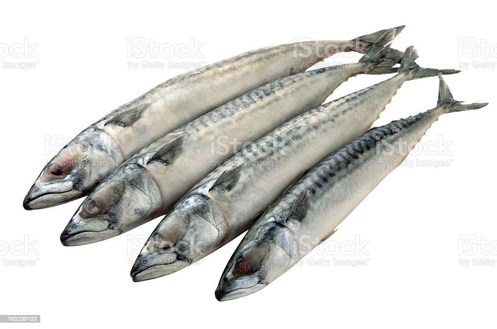 Mackerel fish isolated royalty-free stock photo