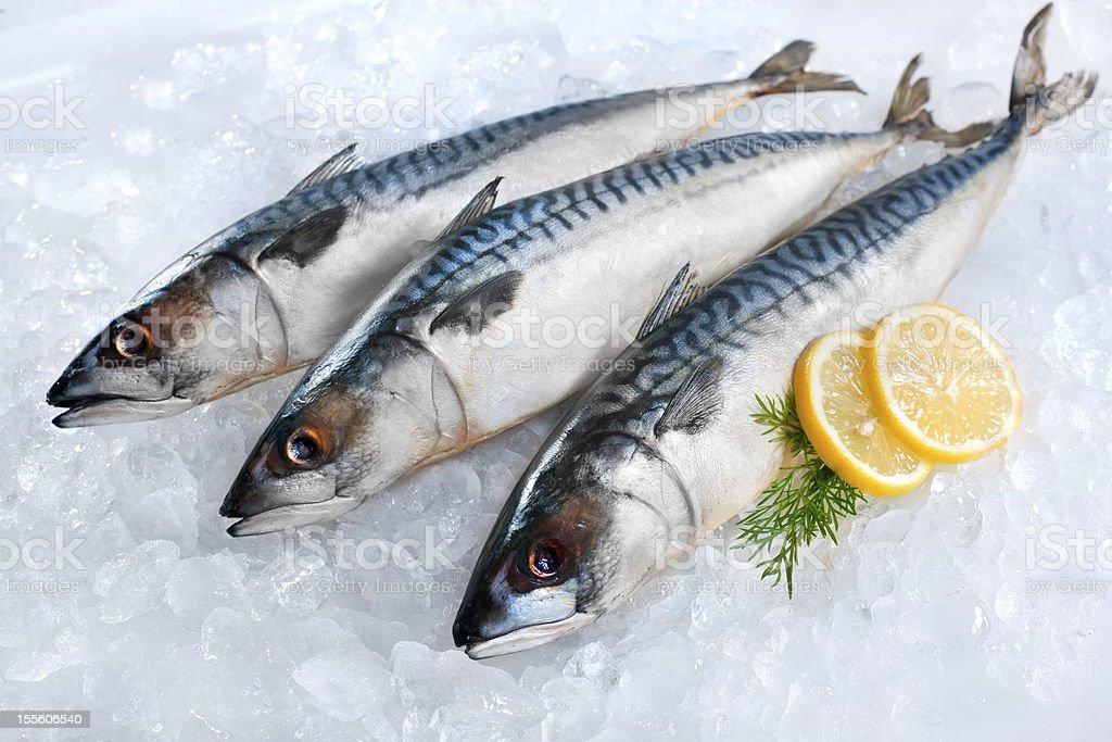 Mackerel fish on ice stock photo