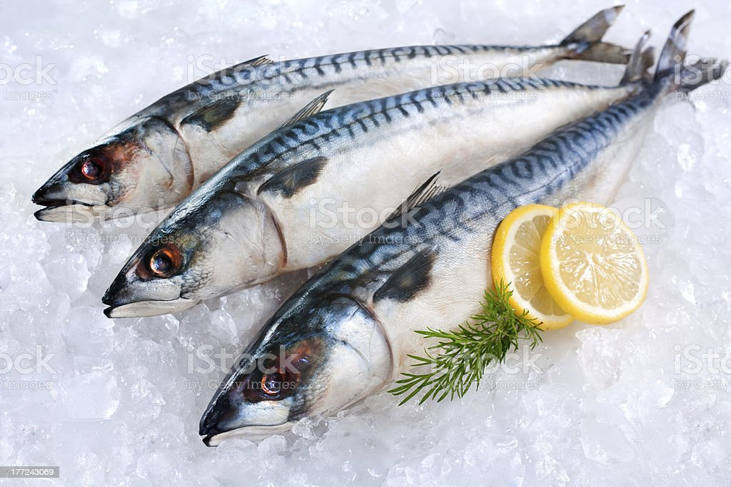 Mackerel fish on ice royalty-free stock photo
