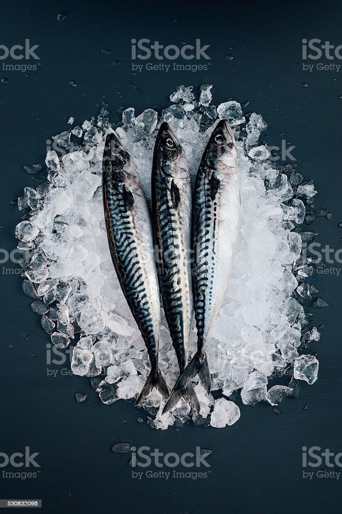 Mackerel fish on ice seafood still life stock photo