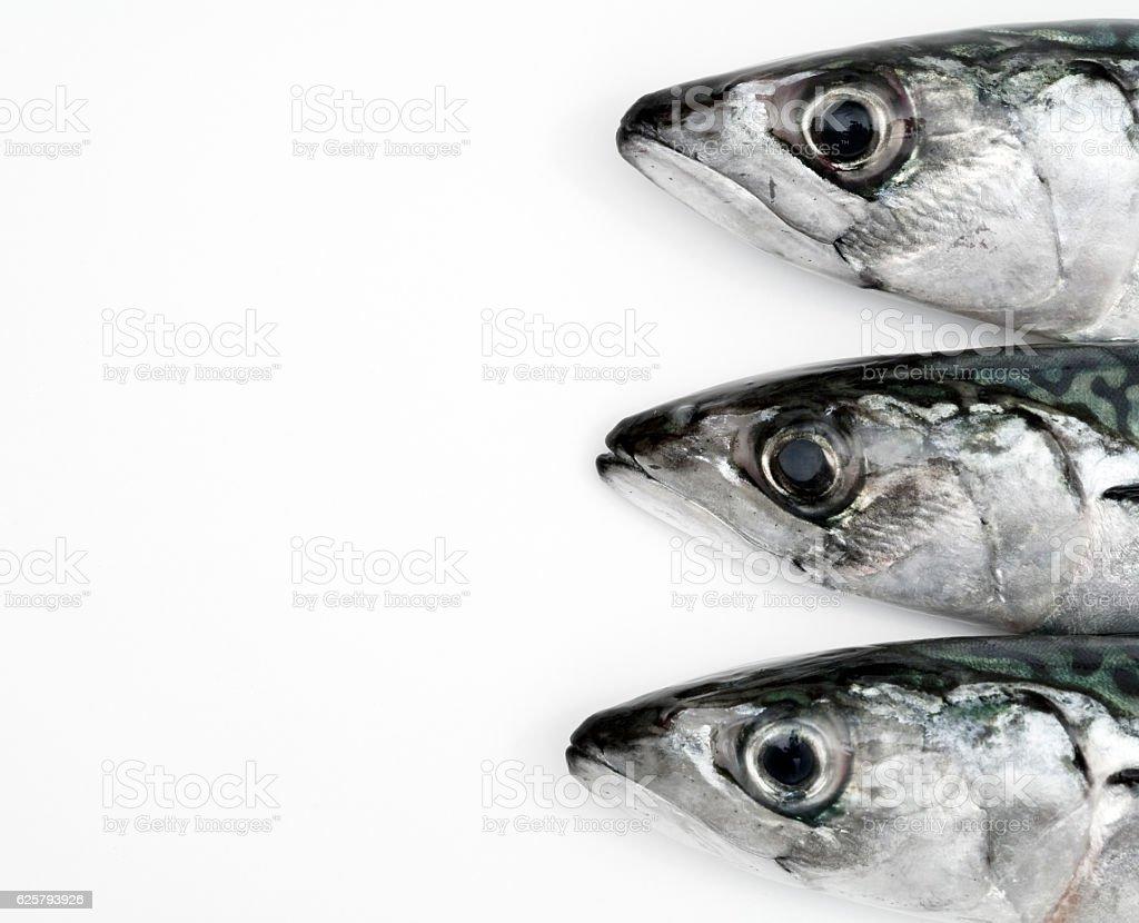 Mackerel fish on white background stock photo
