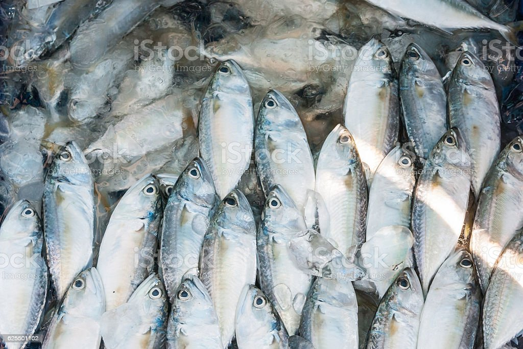 Mackerel For Sale stock photo