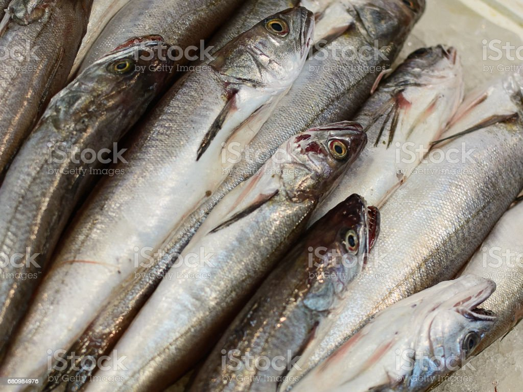 mackerel (scomber scombrus): market of seafood stock photo