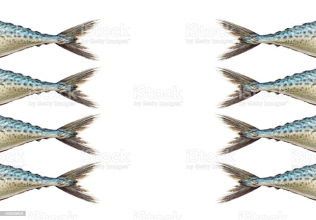 Mackerel  on white background stock photo
