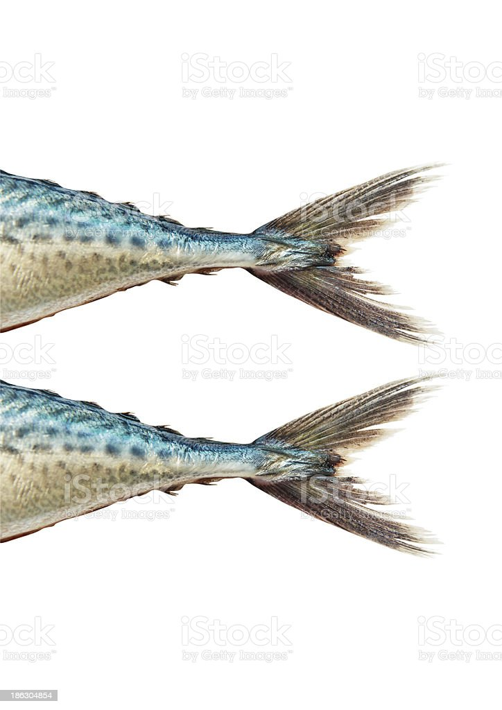 Mackerel  on white background , with clipping path stock photo