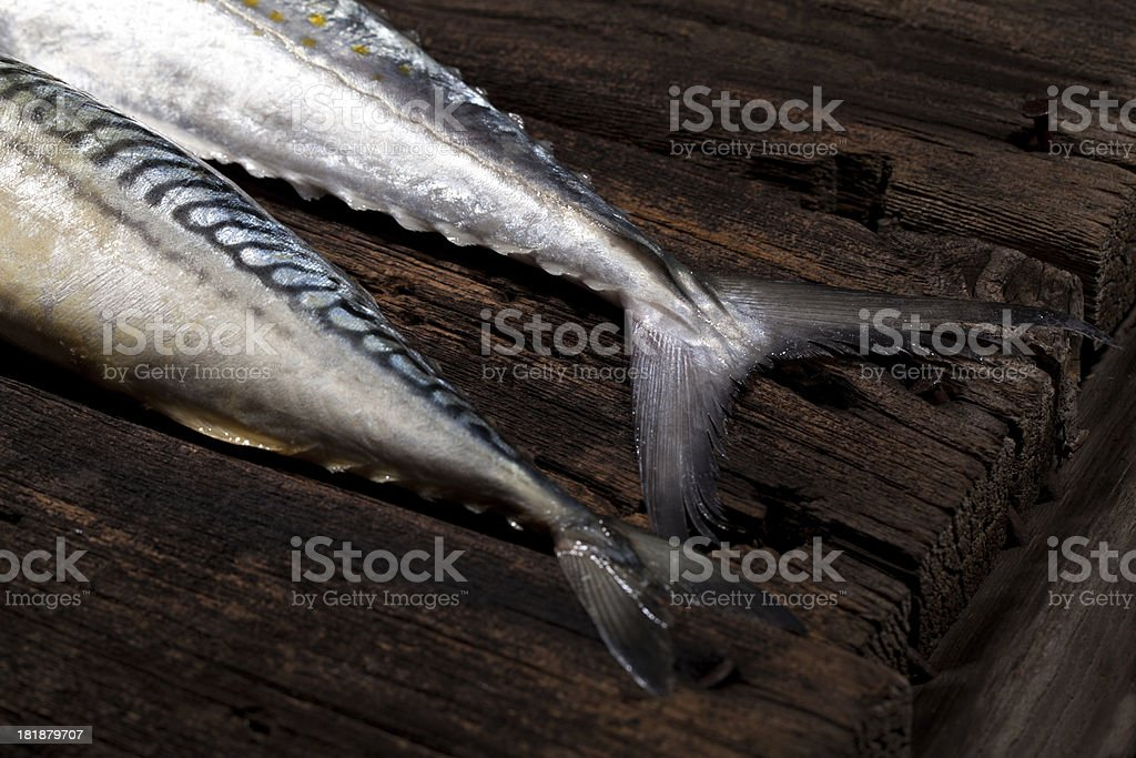 Mackerel royalty-free stock photo
