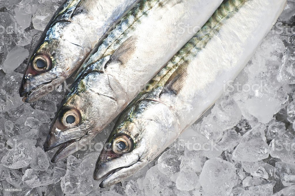 Mackerel royalty-free stock photo