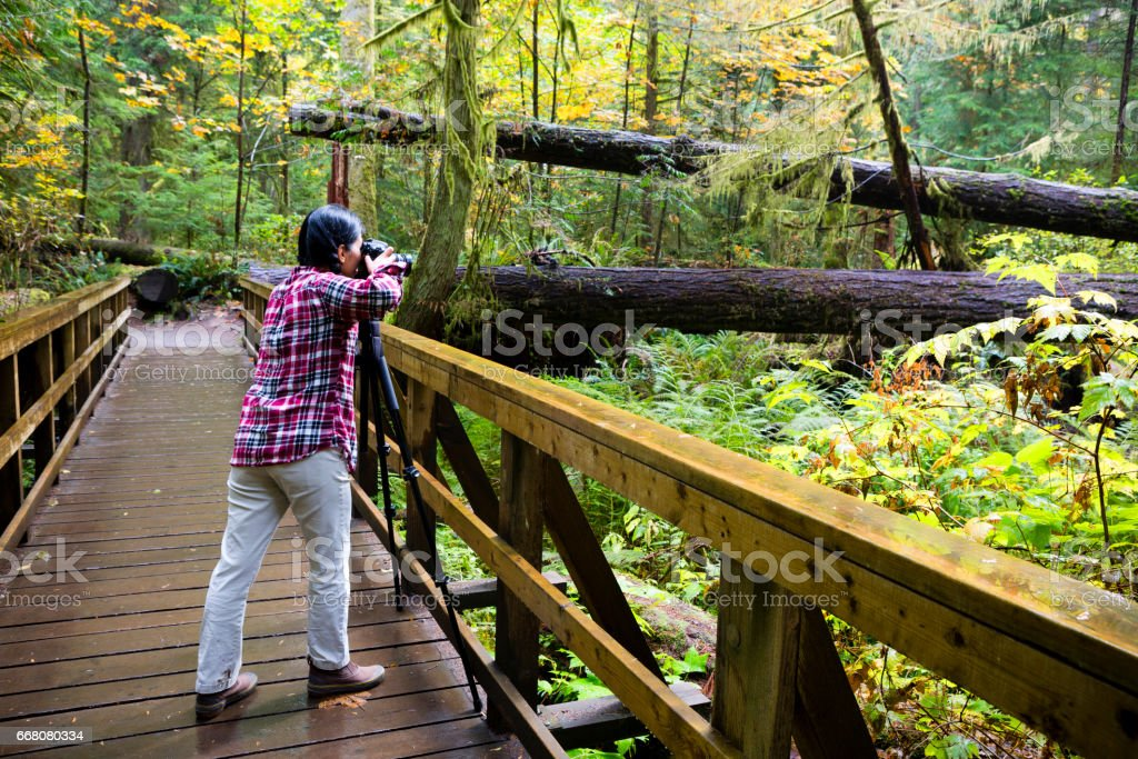 MacMillan Provincial Park Cathedral Grove Vancouver Island Tourist Hobby Photographer stock photo