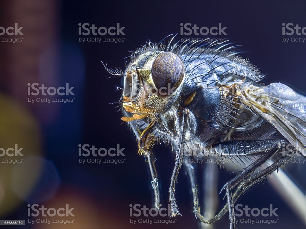Macro a fly side view, close up, large insect stock photo