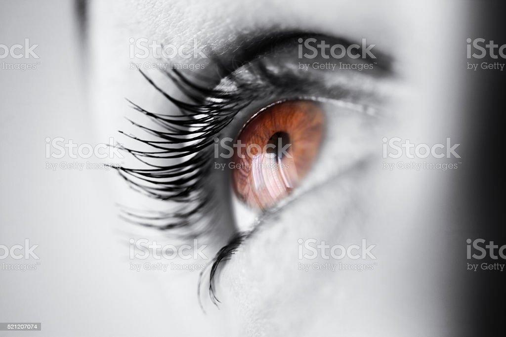 Macro brown eye with long eyelashes stock photo
