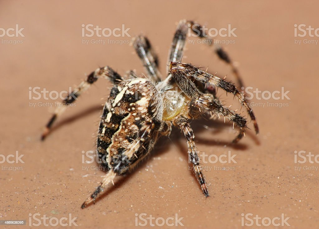 macro close up of a spider stock photo