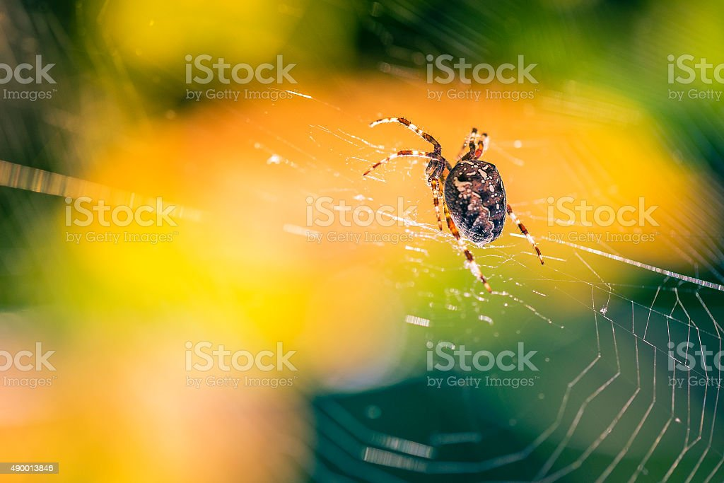 Macro close up on a huge spider stock photo