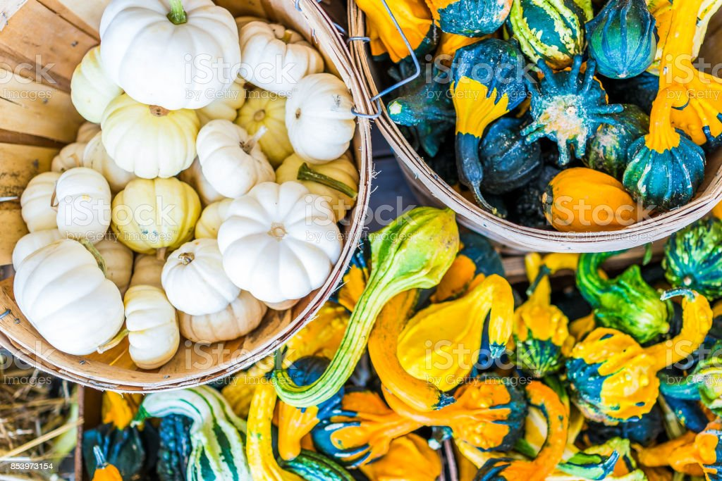 Macro closeup, flat top view of small yellow, white, multicolored, decorative carving pumpkin squash in basket on dry dried hay stack display by store stock photo