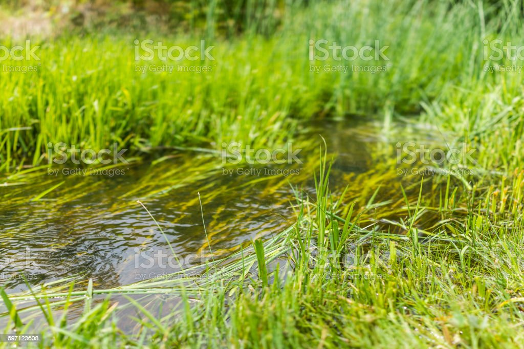 Macro closeup of small creek river with grass showing bokeh and texture stock photo