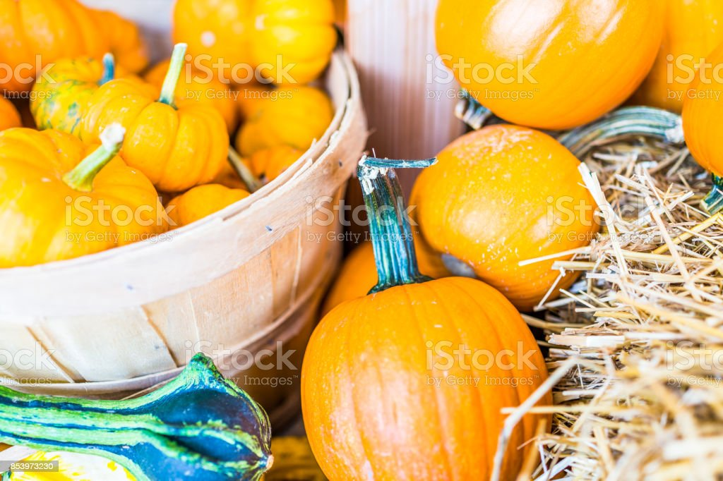 Macro closeup of small yellow decorative carving pumpkin squash in basket on dry dried hay stack display by store stock photo