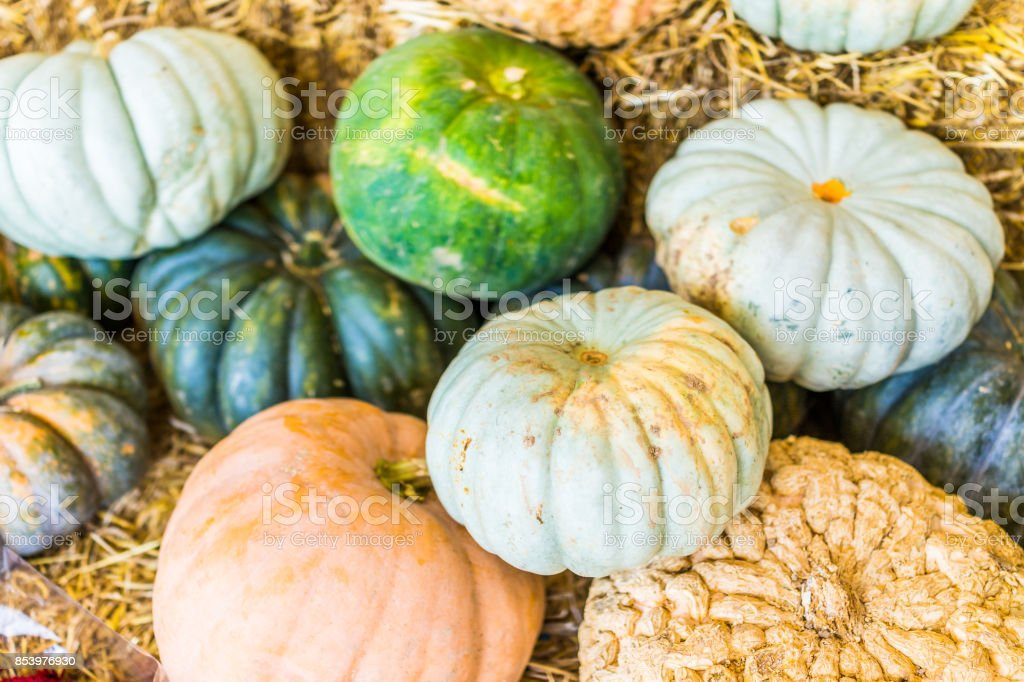Macro closeup of small yellow decorative carving pumpkin squash on dry dried hay stack display by store stock photo