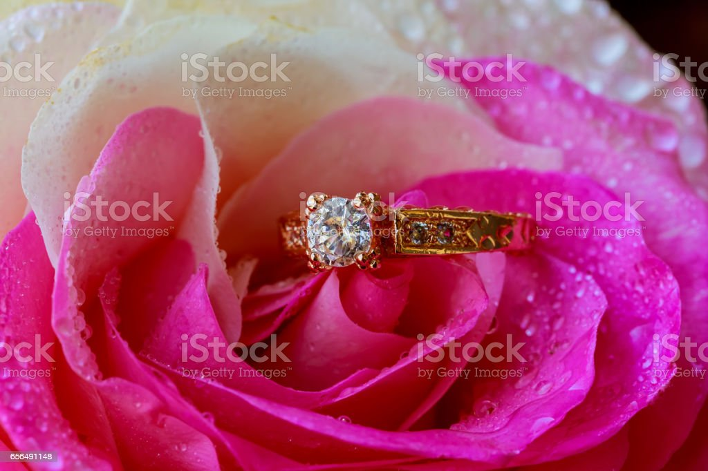 Macro closeup rose with dew drops and beautiful sparkling diamond ring stock photo