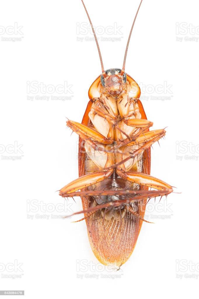 Macro Cockroaches dead dirty stock photo