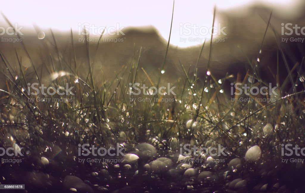 Macro dewy grass abstract stock photo