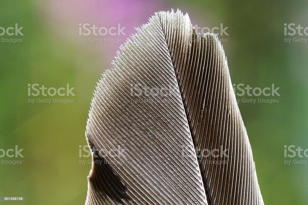macro feather stock photo