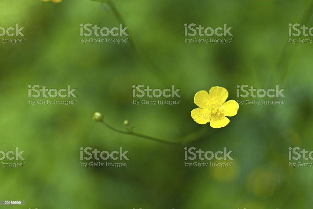 Macro flower royalty-free stock photo