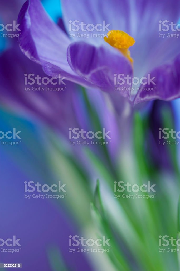 Macro flower stock photo