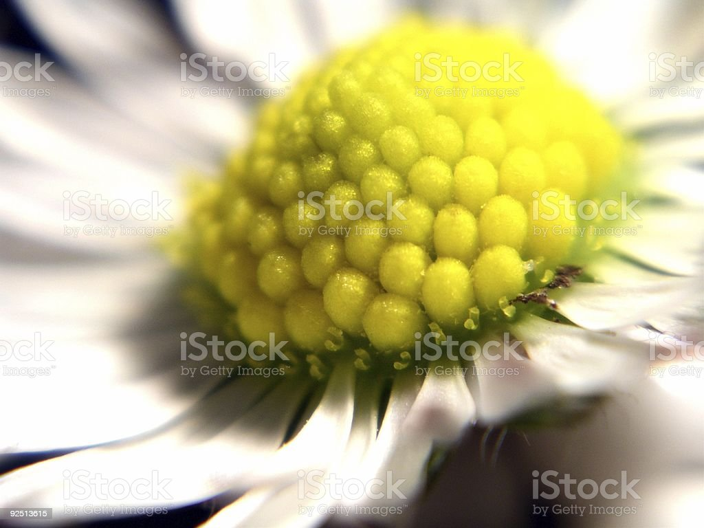 macro flower royalty-free stock photo