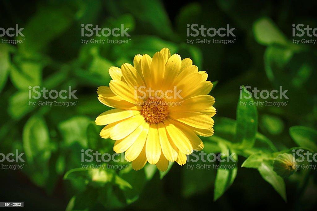 macro flower series royalty-free stock photo
