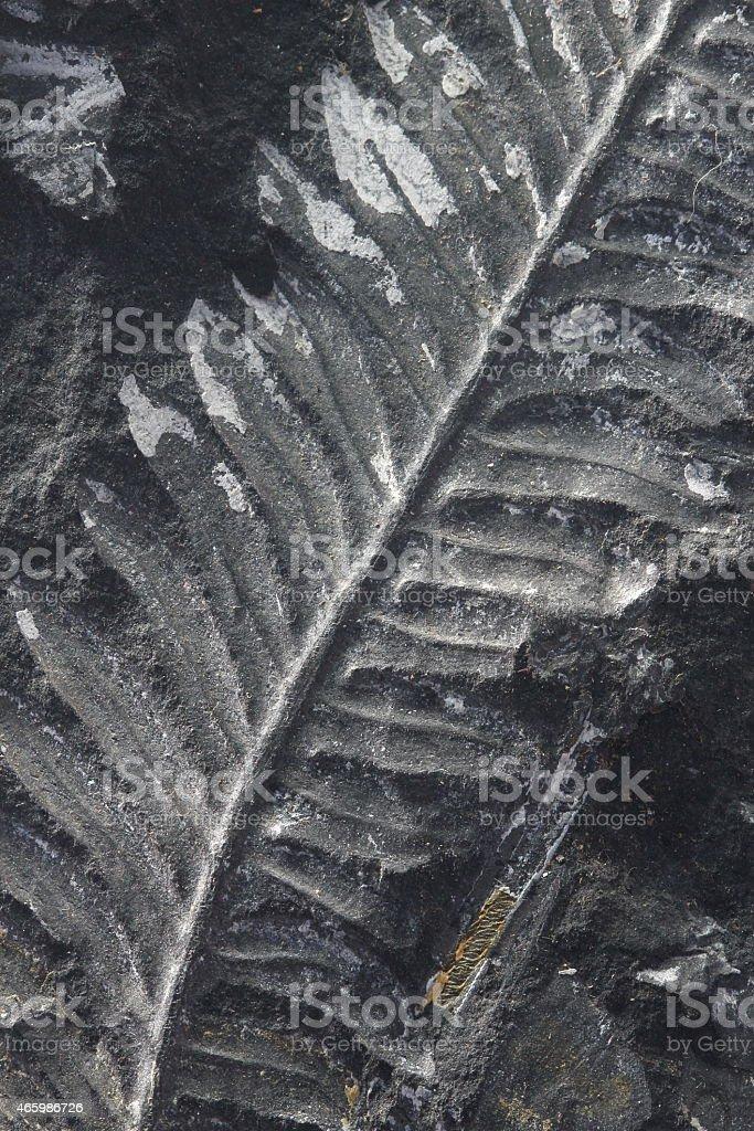 macro fossilized fern on black stone stock photo