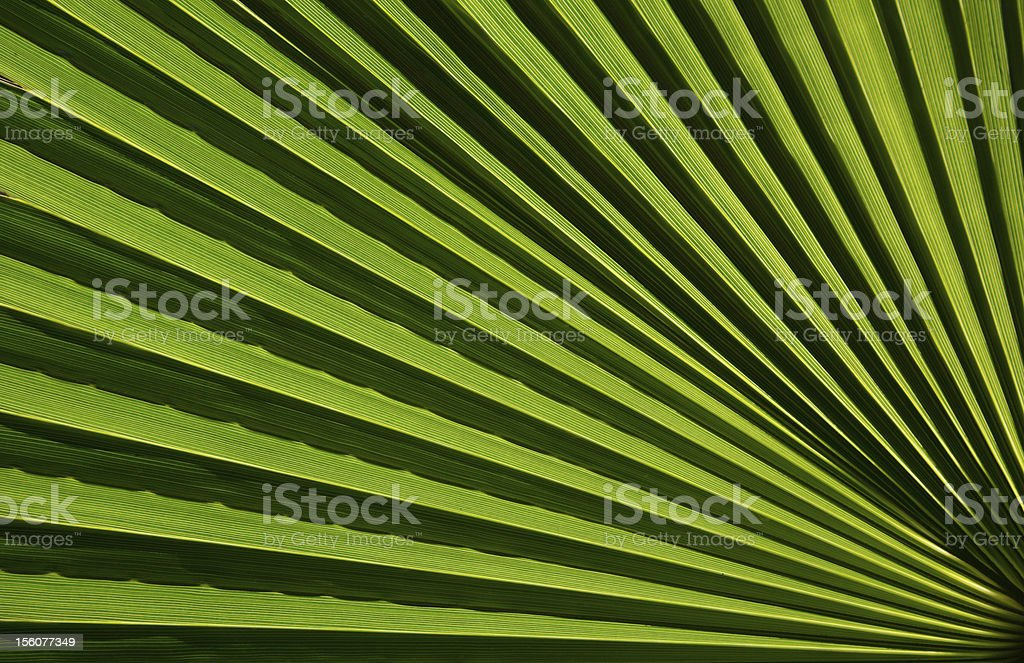 Macro fragment of a palm leaf royalty-free stock photo