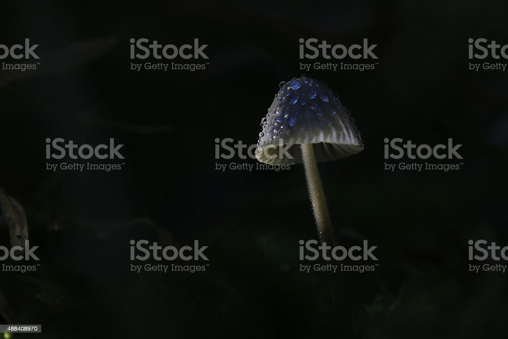 macro fungus mushroom naturally in wood stock photo