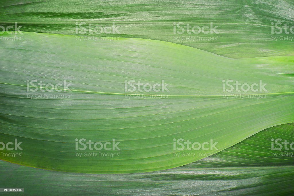 Macro - Green leaf texture stock photo
